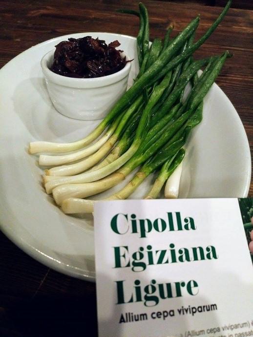 """La Cipolla Egiziana ligure affascina anche il Piemonte: da oggi è nel menù della """"Ca Veja"""" di Lequio Tanaro in provincia di Cuneo."""
