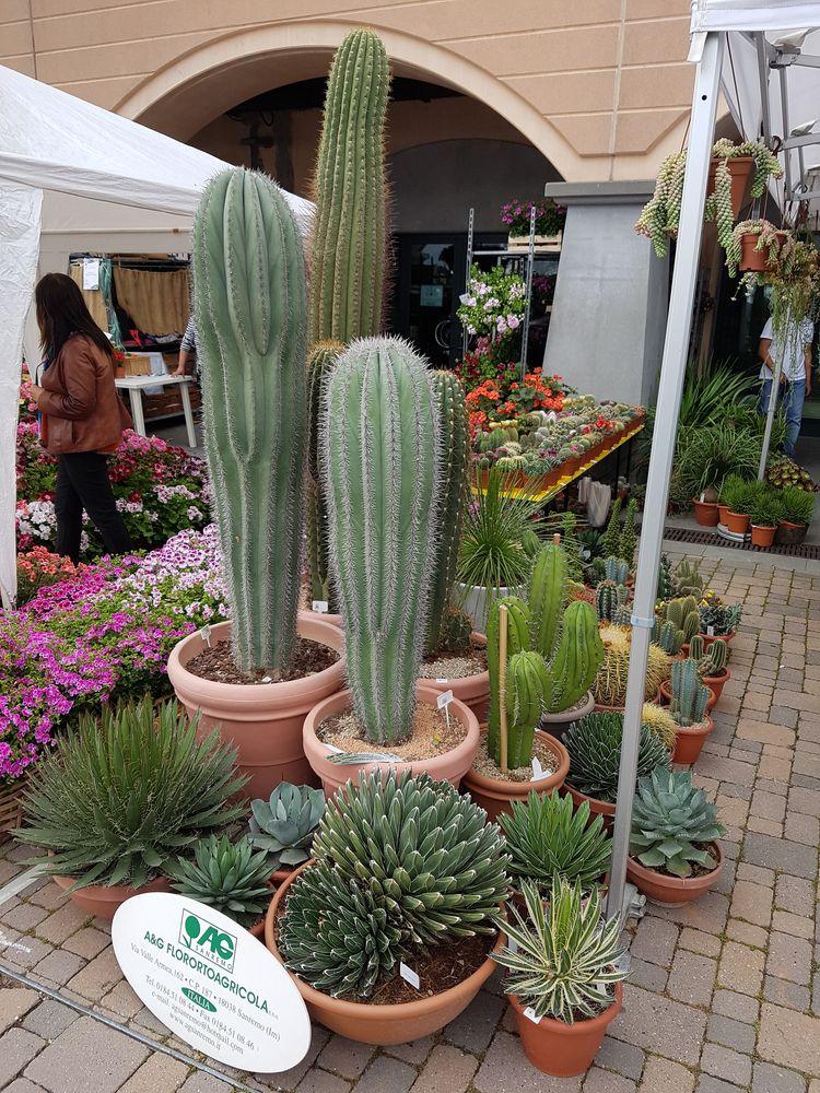Vorresti un bel giardino o un terrazzo ricco di colori ma non hai tempo? Scopri il mondo dei cactus e e delle succulente con AG Sanremo