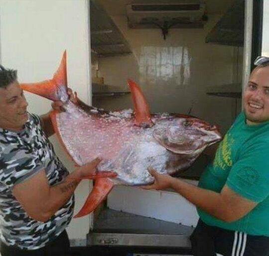 Sanremo un raro e inconsueto pesce re del peso di 38 kg for Un pesce allevato in acque stagnanti