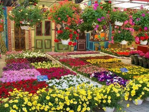 """Tutto pronto per """"Savona in Fiore"""": la rassegna dedicata al florovivaismo"""