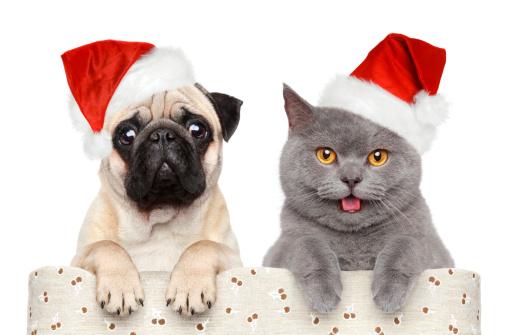 Immagini Natalizie Di Animali.Contest Di Natale Ecco Il Concorso Fotografico Di Sanremo