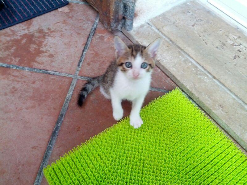 Sanremo due piccoli gattini smarriti in zona san pietro for I gattini piccoli