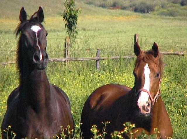Triora questo weekend la festa dei cavalli tante for Quanto costa mantenere un cavallo