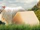 Pecorino sardo DOP: una produzione d'eccellenza italiana