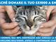 Anche nella nostra provincia è possibile donare il 5x1000 all'Enpa l'associazione che aiuta gli animali