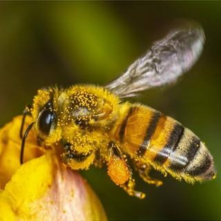 """Coldiretti lancia l'allarme: """"Il clima pazzo mette a rischio la produzione di miele"""""""