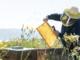 """Anno amaro per il miele, Coldiretti chiede lo stato di calamità. Apicoltore imperiese Luca Megiovanni """"Un 2019 da dimenticare"""""""