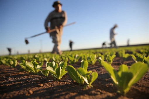 """Sempre più ragazzi scelgono la strada dell'agricoltura, ma come fare? Ne parliamo con Coldiretti: """"Un lavoro che ripaga della fatica, dei sacrifici del freddo, del caldo"""""""