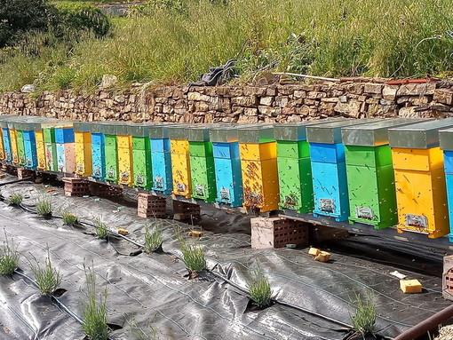 Oggi la 'Giornata delle api': boom acquisti di miele, ma clima pazzo mette a rischio la produzione