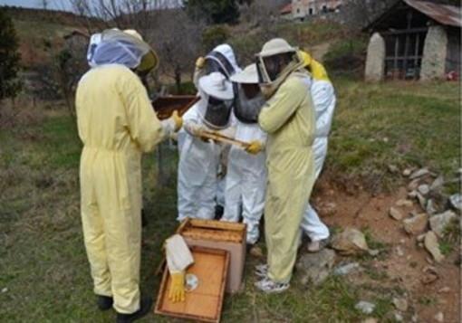 Imperia: una serie di corsi base per formare nuove leve di apicoltori anche nella nostra provincia