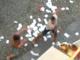 Sanremo: due stranieri si picchiano all'esterno di un bar, individuato ed arrestato l'aggressore dalla Polizia (Foto e Video)
