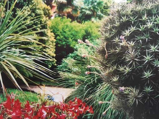 """Bordighera: """"Il Giardino, che non c'è più"""" è la nuova mostra con le fotografie di Vera, promossa dall'ANPI e dall'UCD nella sede in via Al Mercato n.8 di Bordighera."""