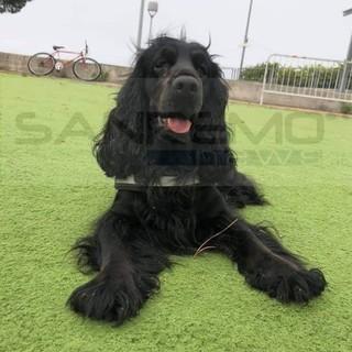 Sanremo: cade con lo scooter e le sfugge la cagnolina 'Fiamma', l'appello della proprietaria (Foto)