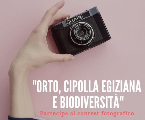 Un concorso fotografico on line su orto, cipolla egiziana e biodiversità: lo ha organizzato Marco Damele
