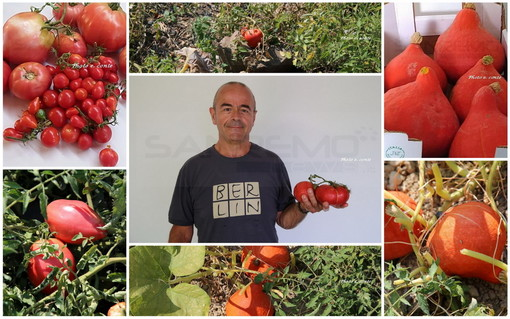 Piante innovative a Bordighera: nell'orto di un grande appassionato pomodori  e zucche che crescono senz'acqua (Foto)