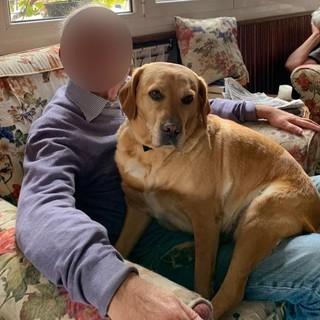 Prelà: è fuggita da casa la cagnolona 'Dotti', l'appello dei proprietari per chi l'avesse vista (Foto)