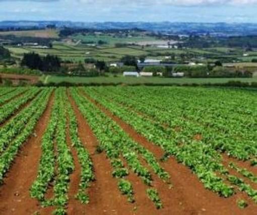 """Agricoltura post-Covid, la Coldiretti Imperia: """"Occorre investire e ridurre la dipendenza dall'estero"""""""