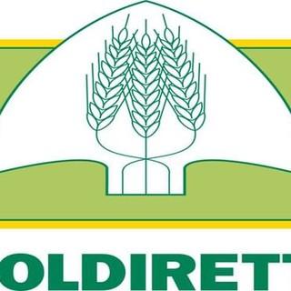 """UE, Coldiretti: """"Carne finta, no al furto di identità che inganna i consumatori"""""""