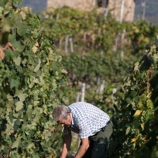 Agricoltura: necessari voucher e semplificazione burocratica per reperire agilmente manodopera da inserire in azienda