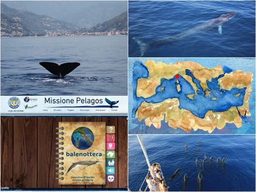 """Le bellezze del mare sui banchi di scuola, nasce il progetto """"Missione Pelagos, balene e delfini dei nostri mari"""""""
