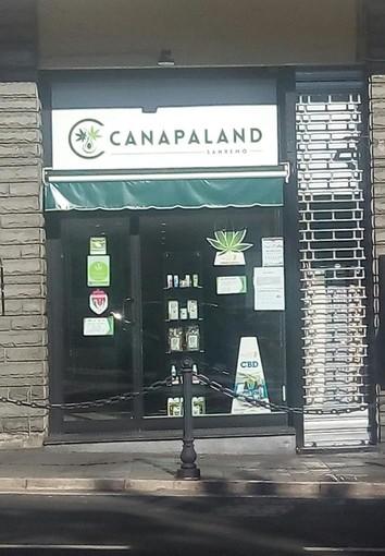 Canapaland una nuova realtà economica ligure che fonda le sue radici sulla coltivazione e la vendita della Cannabis light