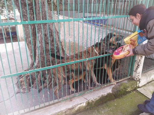 """Enpa di Sanremo: """"Io sono un cane: vivo, respiro e non sono una cosa, sono un cane abbandonato in un canile"""" (Video)"""