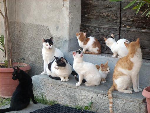 Sanremo: a cura della 'Lega del Gatto' prosegue la raccolta di cibo nel negozio 'Arcaplanet'