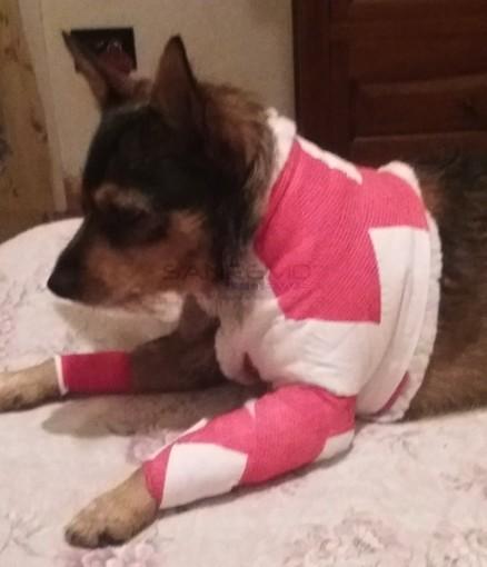 Il cane ferito oggi nella Pigna