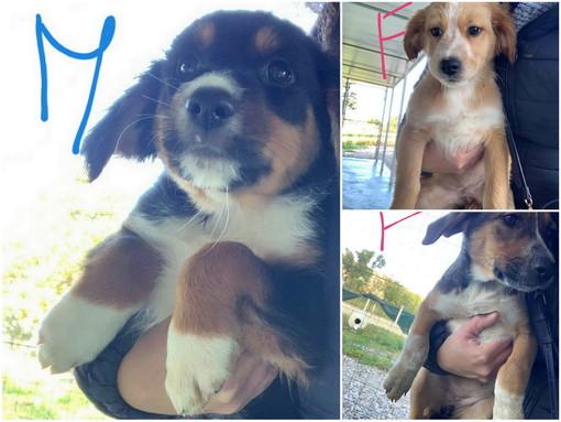 Sanremo: tre bellissimi cuccioli  hanno bisogno di nuove famiglie