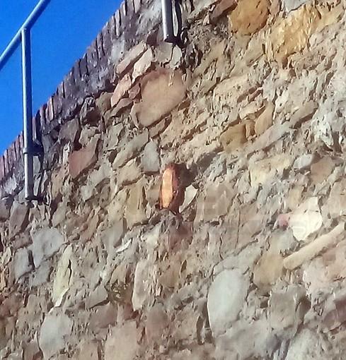 Sanremo: situazione di degrado in strada Sen. Marsaglia ma qualcuno ha tagliato una pianta di 30 anni (Foto)