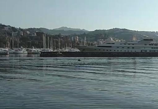Il delfino nel porto di Sanremo