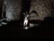 L'esibizione di Davide Laura ai piedi del castello di Bajardo