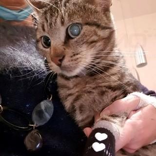 Ospedaletti: il gatto 'Smi' è alla ricerca di una famiglia che possa adottarlo e volergli bene (Foto)