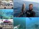 Sanremo: immersioni e pesca subacquea, le passioni di una vita nei video che Enrico Creta postava su Facebook (Video)