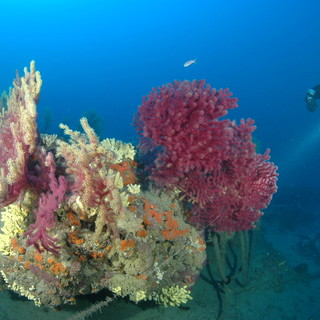 """Un tuffo nel 'SIC' marino di Capo Berta, prosegue l'attività informativa e di sensibilizzazione del Lions Club: """"Più si conosce il mare più lo si ama"""""""