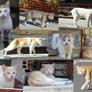 Arma di Taggia: troppi abbandoni di gatti, le volontarie sono allo stremo. Sabato raccolta di cibo