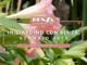 Come trattare a Gennaio tappeti erbosi, piante da frutta, piante da orto e giardino: i consigli dell'agronomo Enrico Leva, collaboratore della ditta Benza