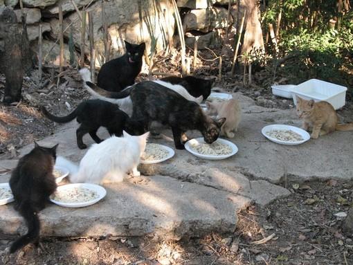 Sanremo: oltre 43 mila euro a disposizione di chi si prenderà cura per tre anni di gatti randagi e colonie feline