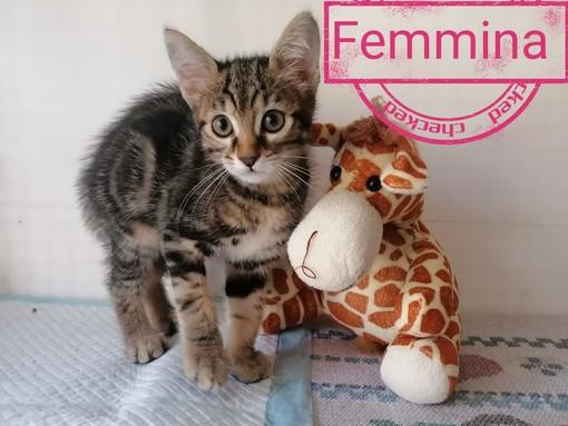 Tanti mici del gattile di Ventimiglia stanno cercando casa (Fotogallery)