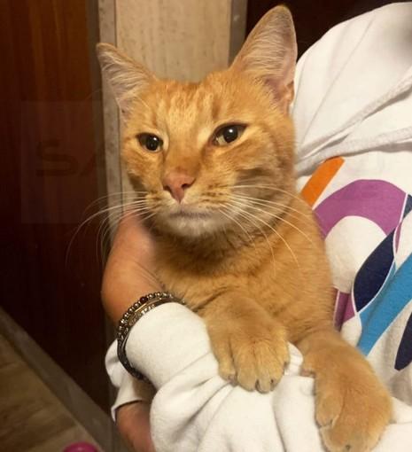 Sanremo: trovato un gatto rosso in via Galileo Galilei nella zona del Don Orione (Foto)