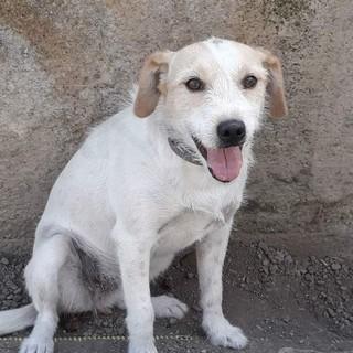 Sanremo: smarrita nella zona tra via Peiranze e San Martino la cagnolina 'Gioia', l'appello dei proprietari