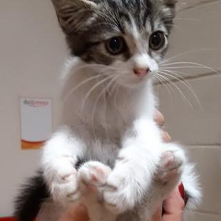 Sanremo: il gattino Romolo è stato adottato