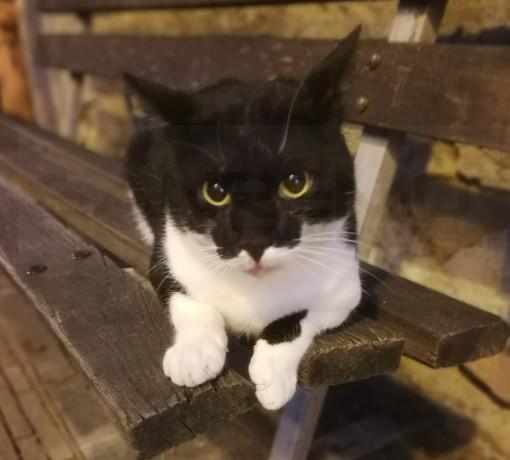 Sanremo: 'Mascherina' un gatto randagio vive in piazza San Bernardo, si cerca qualcuno che la adotti