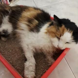 Sanremo: gatta trovata nella zona di San Bartolomeo, si cercano i proprietari (Foto)