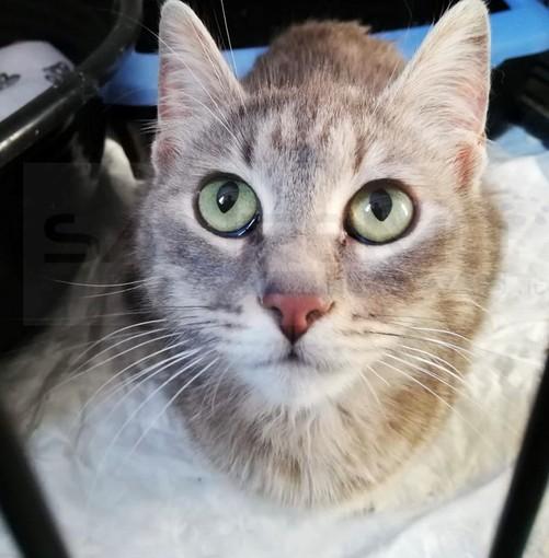Arma di Taggia: molti abbandoni negli ultimi giorni e tanti gatti in strada, eccone uno in cerca di famiglia (Foto)