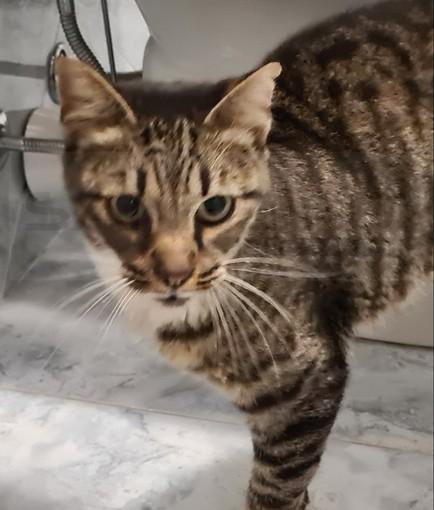 Dal gattile alluvionato di Ventimiglia la gatta 'Helen' cerca una casa e una famiglia (Foto)