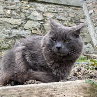Il gatto smarrito in zona San Giacomo