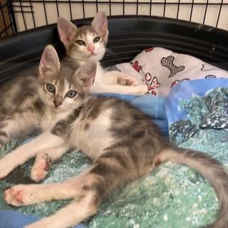 Arma di Taggia: quarto abbandono di gatti appena nati in un parcheggio, l'allarme delle volontarie locali