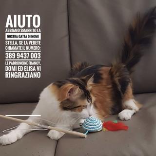 Sanremo: smarrita la gatta 'Stella' nella zona di salita San Bernardo