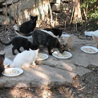 Sanremo: aggiudicato il servizio triennale per il ricovero e l'assistenza di animali randagi